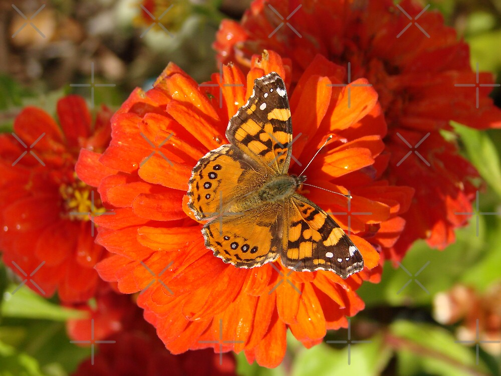 Butterfly Kisses II by Kimberly Miller