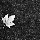 Leaf in Black and White by Dawn Mahaney