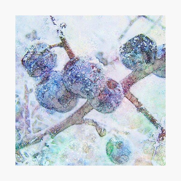 Vibrant Frost 1 Photographic Print