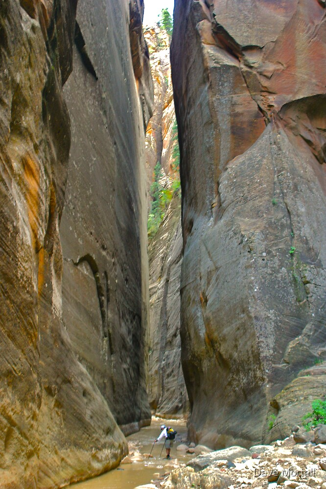 The Narrows of Zion by Dave Mortell