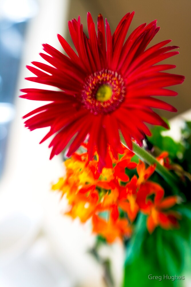 Lensbaby Flower by Greg Hughes