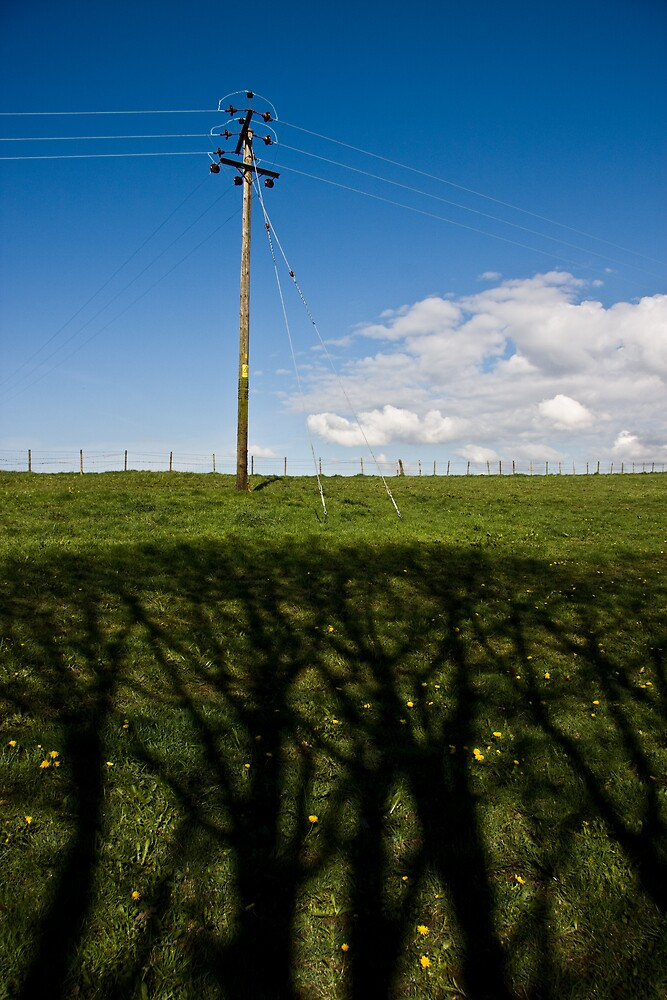 Hedge shadows by Mark E. Coward