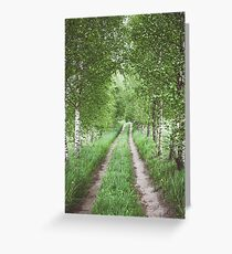 Alley of green birches Greeting Card