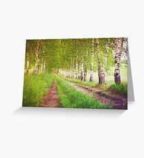 Green birches alley at sunrise Greeting Card