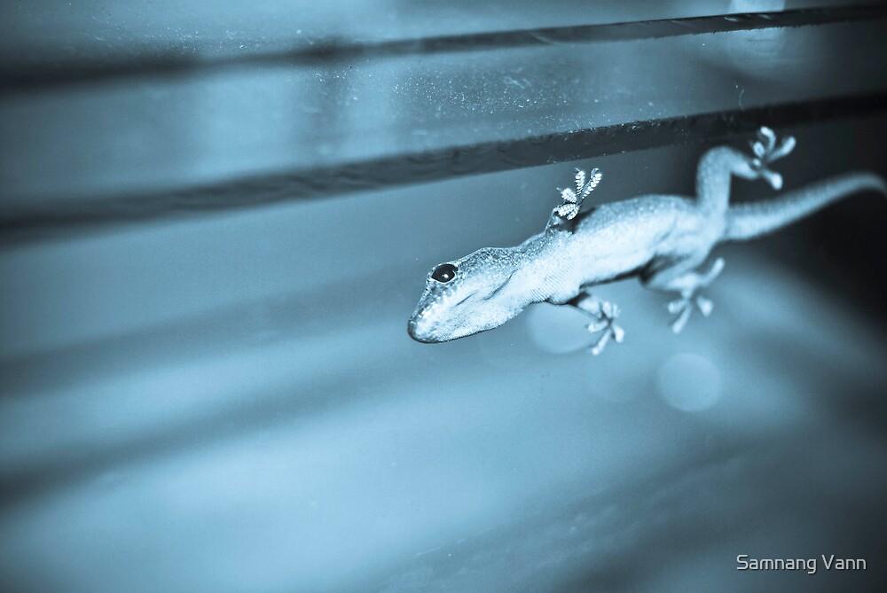 gecko by Samnang Vann