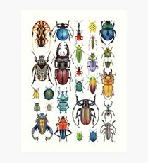 Beetle Collection Art Print