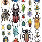 Beetle Collection by Kelly King