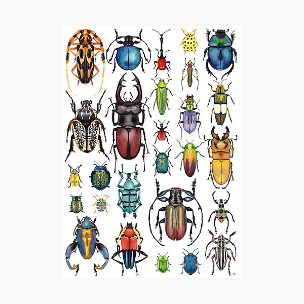 Beetle Collection Photographic Print