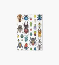 Beetle Collection Art Board