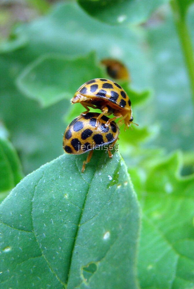 Lady Beetle Piggy Back (Issy age 5) by jeciaissy