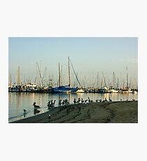 Santa Barbara California Brown Pelican Marina Photographic Print
