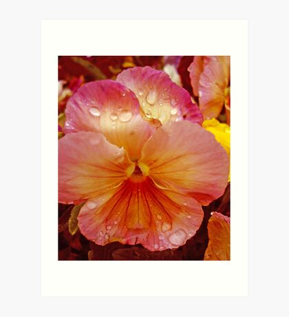 Special Pansy Art Print