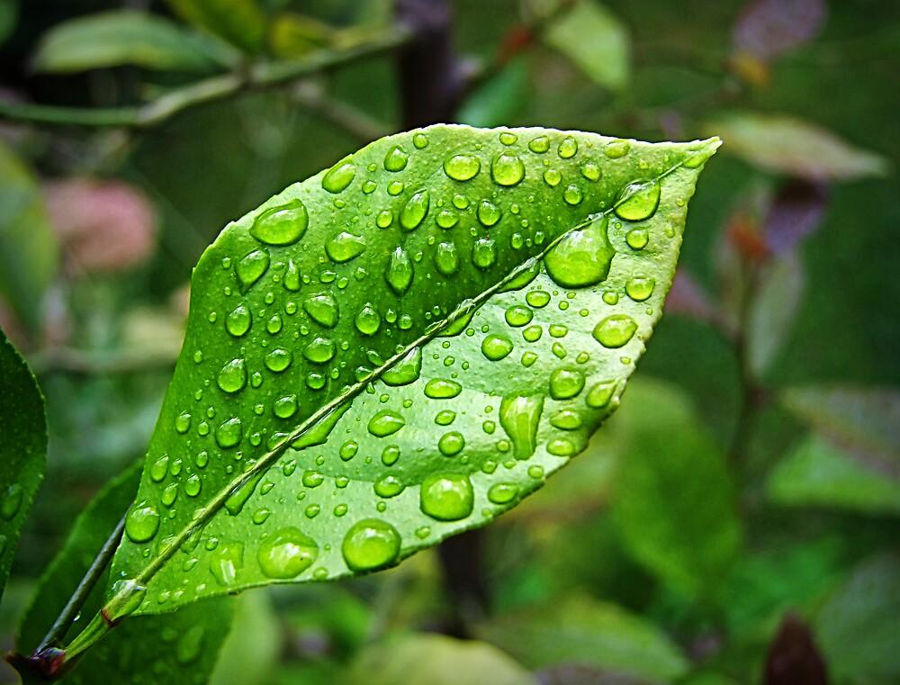 Lemon dew by Maistora