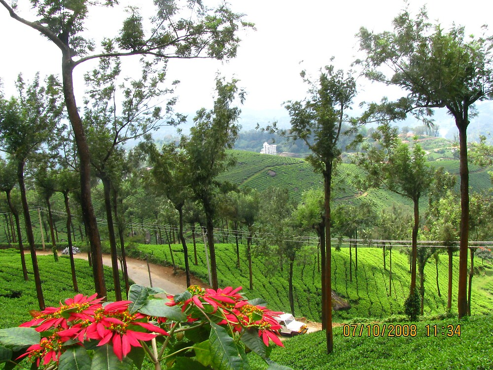 tea garden with flowers by mathewkmangalam