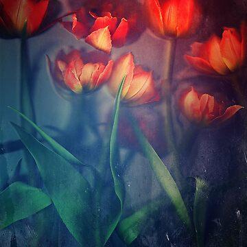 Orange Tulips by winggleam