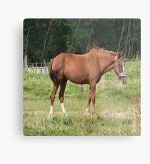 Braunes Pferd Metalldruck