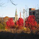 three red maples urban stormoak lonewind by Stormoak Lonewind