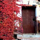Door and Vines  by Stormoak Lonewind