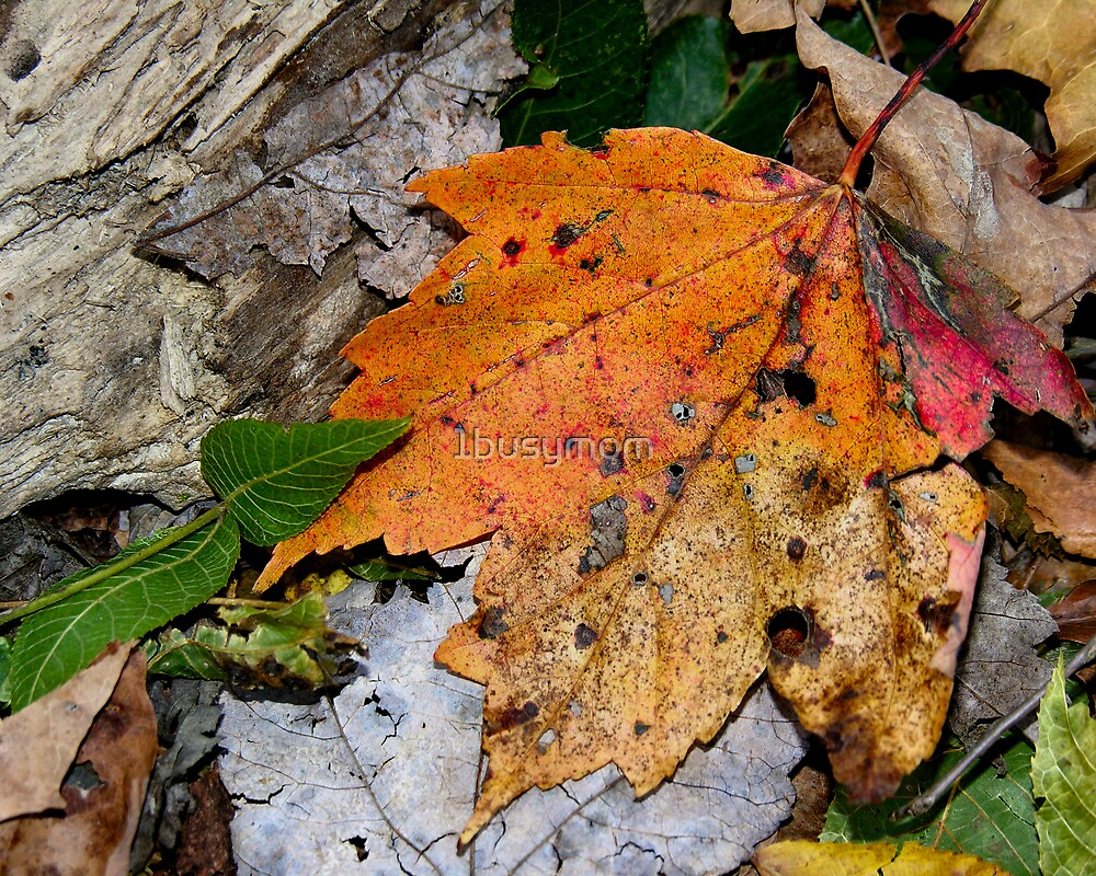 fall leaf on the ground by 1busymom