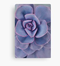 Purple Pearl Canvas Print
