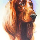 Irish Setter by BarbBarcikKeith