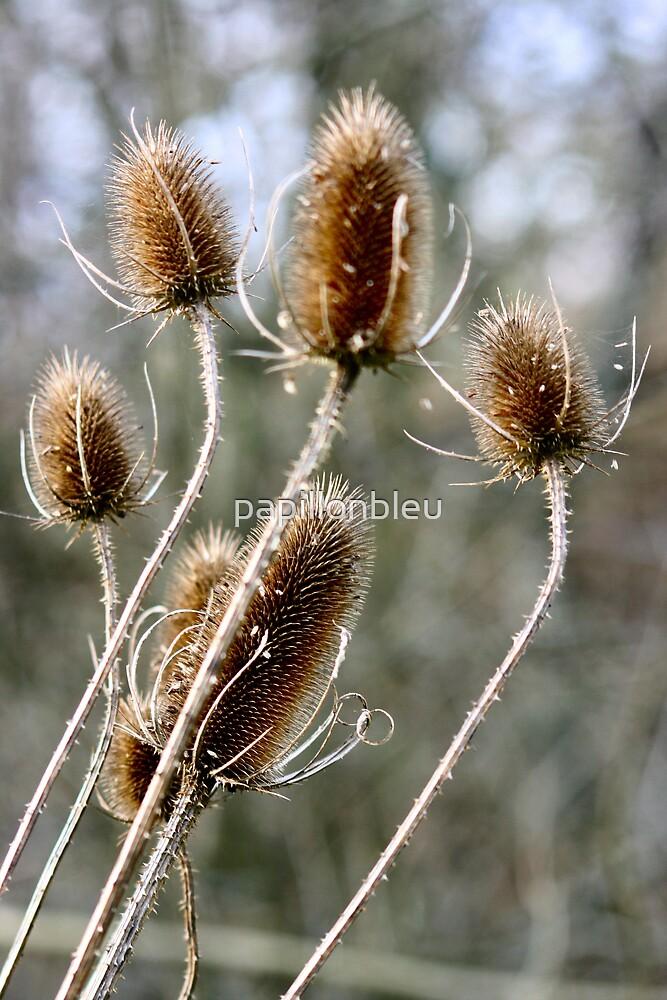 Winter Thistles by Pamela Jayne Smith