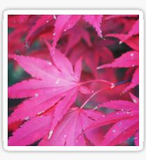 Red Japanese maple leaves Sticker