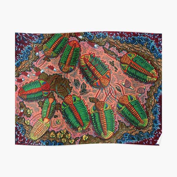 Phacops Trilobite Poster