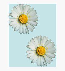 Two white daisies Photographic Print