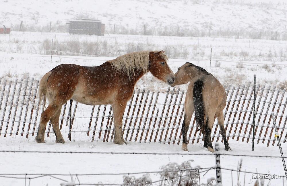 Winter Kisses by talkn2john