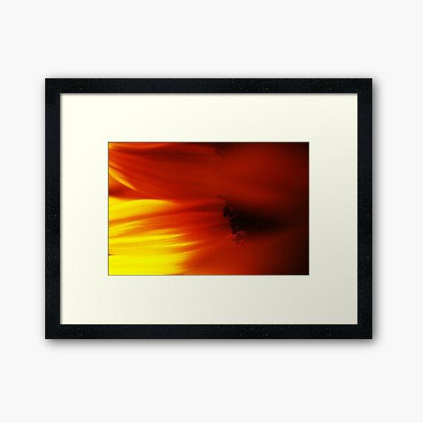 Sunflower Petals #3 Framed Art Print