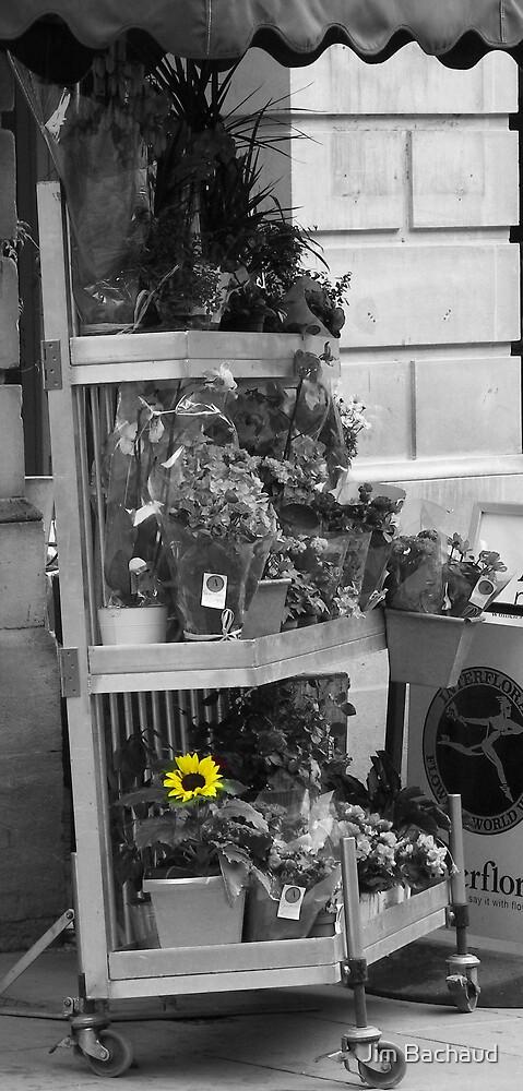 FlowerShop by Jim Bachaud
