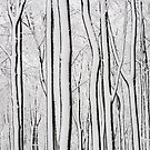 Abstract trees by Jeff  Wilson