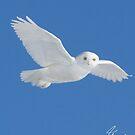 White Angel by DigitallyStill