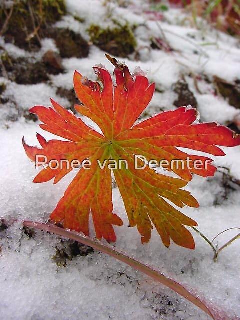 Orange on ice by Ronee van Deemter