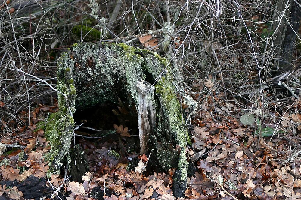 Hollow Stump by RolandTumble
