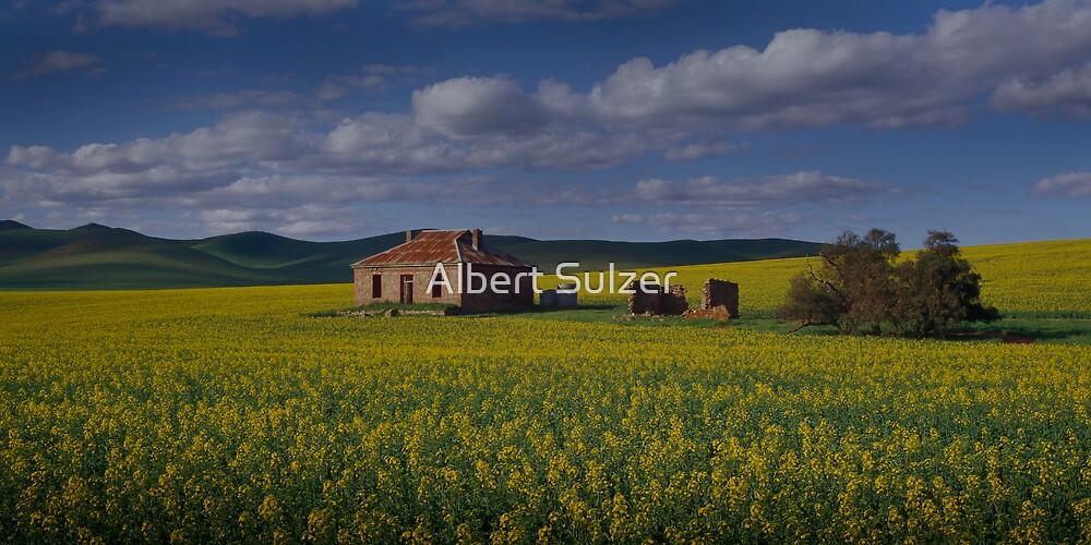 Field of Gold Burra S.Australia by Albert Sulzer