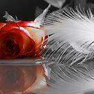 Rote Rosen und weiße Federn  by Aviana