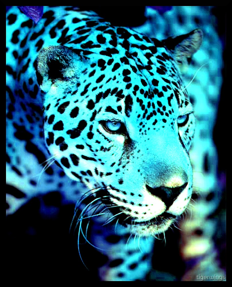 A Blue Jag... by tigerwings