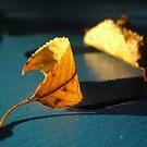 Beggining of Fall by Mojca Savicki
