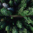 «Aerial Forest Green Trees» de La Chic