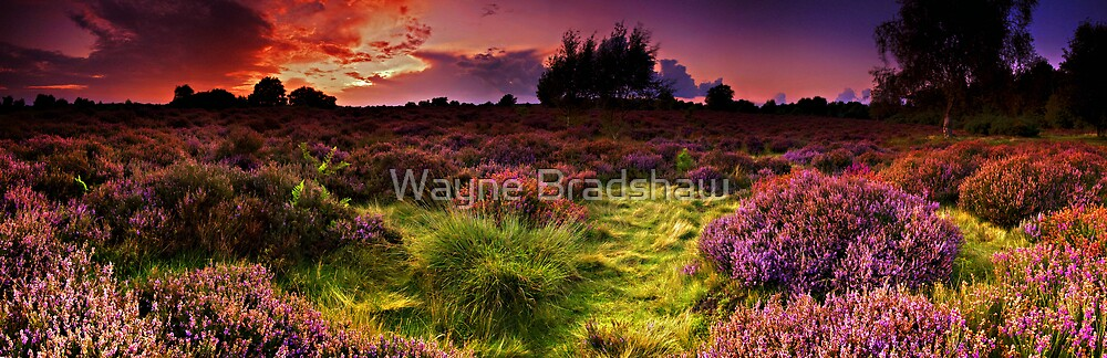 Dunwich Heath Panoramas. by Wayne Bradshaw