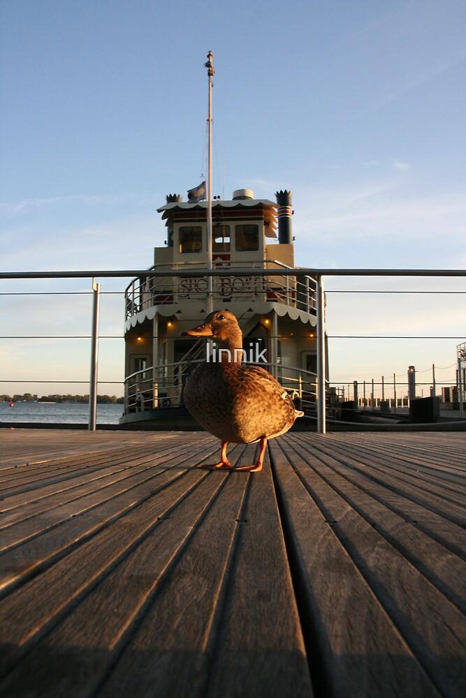 Duck by linnik