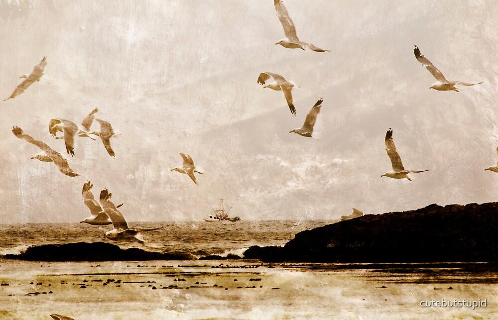gull's echo by cutebutstupid