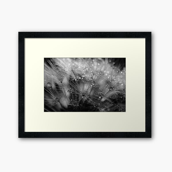 Dandelion Study #4 Framed Art Print