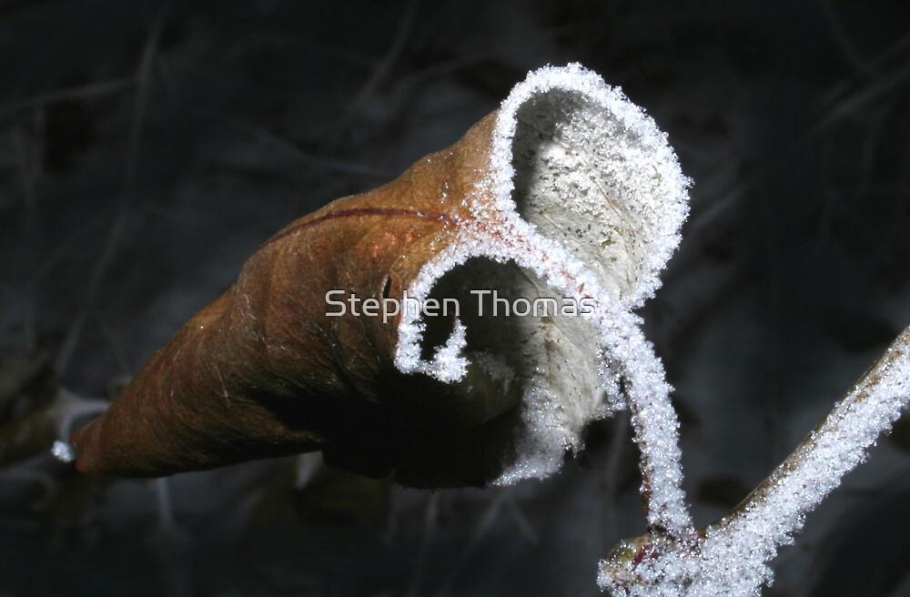 frozen fancy by Stephen Thomas