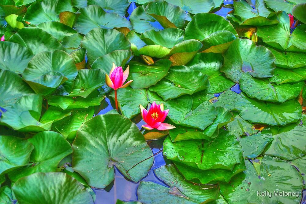 lillies by Kelly Maloney