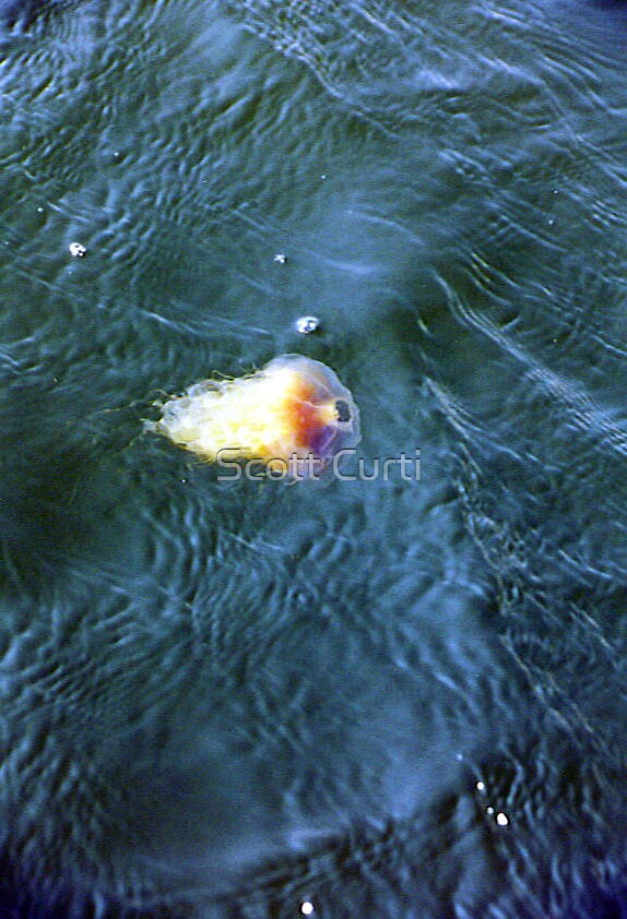 jelly in the water by Scott Curti