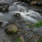 Mountain Stream by Barbara  Brown