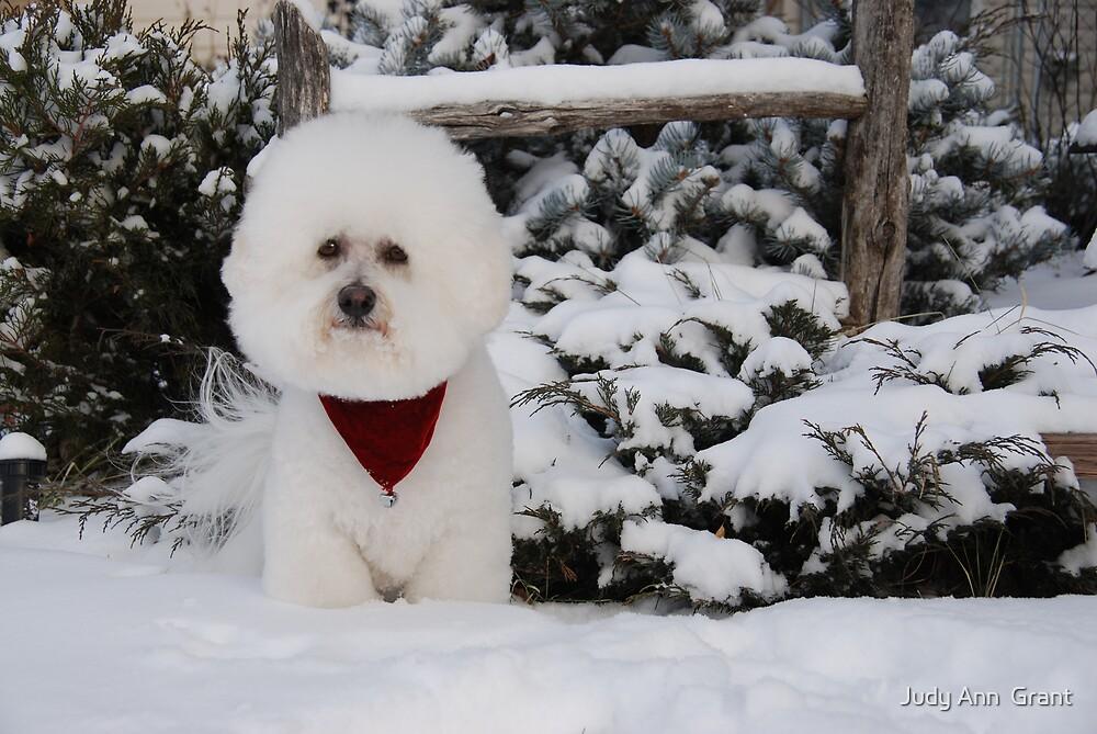 Snow Angel  by Judy Ann  Grant